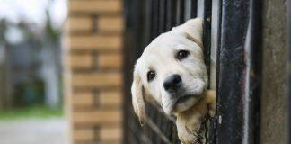 Чому у Чехії немає безпритульних собак