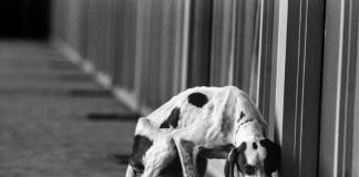 жорстоке поводження з тваринами