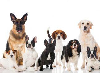 утримання собаки в Чехії
